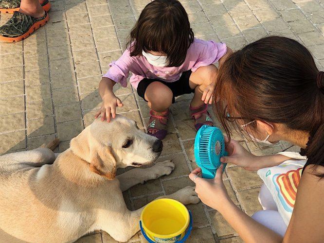 Too hot to walk the doggies! by Wong Tsz Tsun